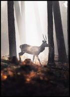 Deer in Forest Poster