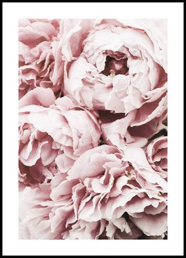 Pink Peony Dream Poster