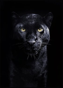 Panther Poster