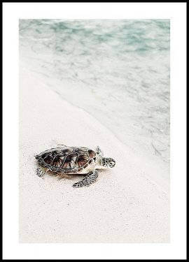 Turtle on the Beach Poster