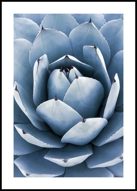 Blauwe Agave Poster