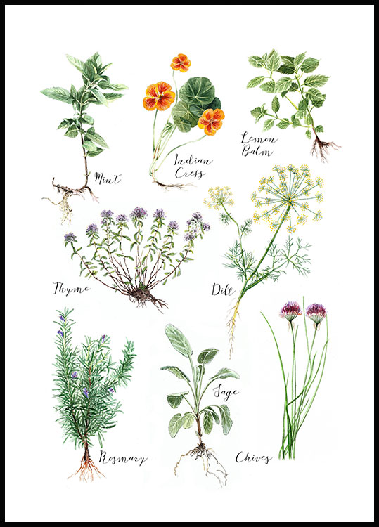 Kitchen Herbs Poster