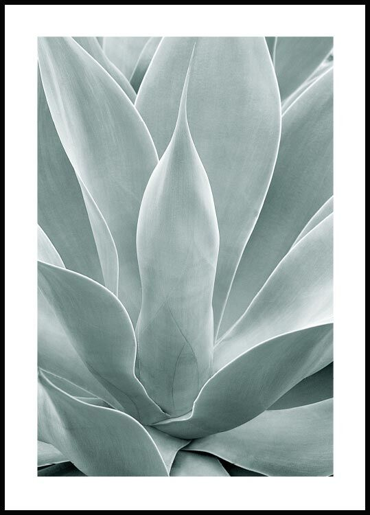 Agave cactus Poster